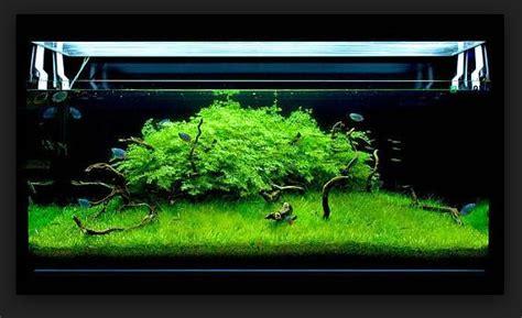 membuat lu aquascape led fungsi kelebihan dan kekurangan menggunakan lu led