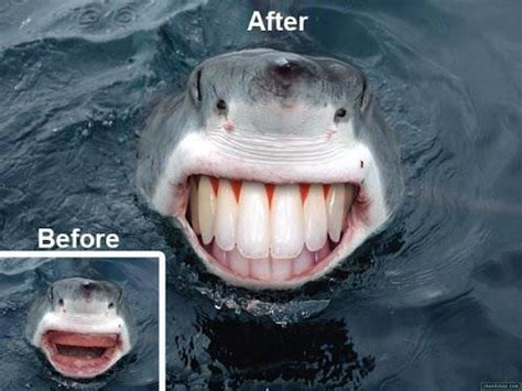 pug with dentures shark dentures dobrador fish sharks