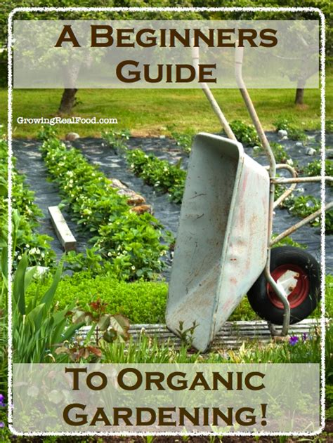a beginners guide to growing an african american child s a beginner s guide to organic gardening