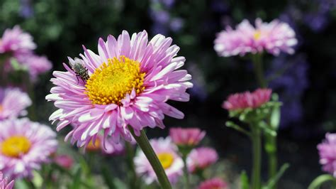 flowers garden photos free stock photo of flora floral flowers