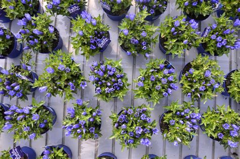 piante a cespuglio fiorite piante perenni da esterno fiori perenni piante perenni