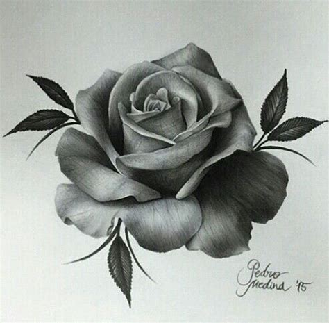 pictures rose tattoo sketch drawings art gallery