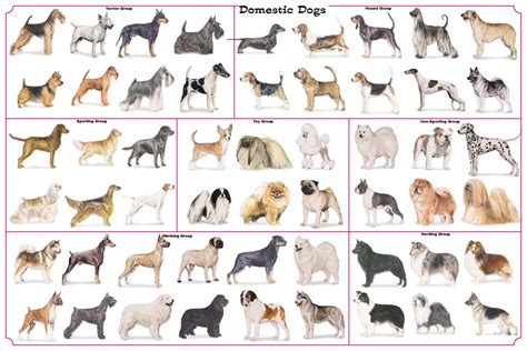 breeds species evolution of breeds www imgkid the image kid has it