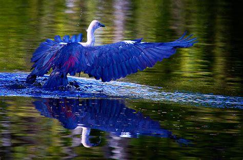 bird photography  beginners slr photography guide