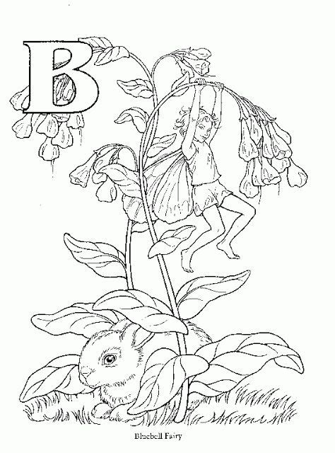 fairies in bloom a flower coloring book books 529 best images about flower printables on