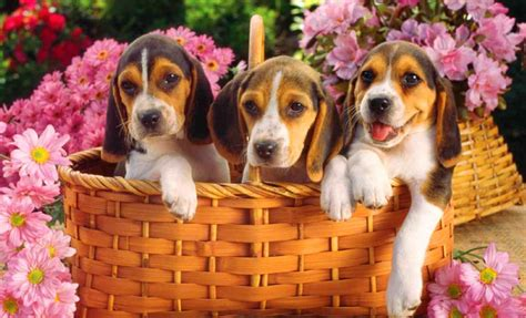 free of with dogs free wallpaper with dogs 52dazhew gallery