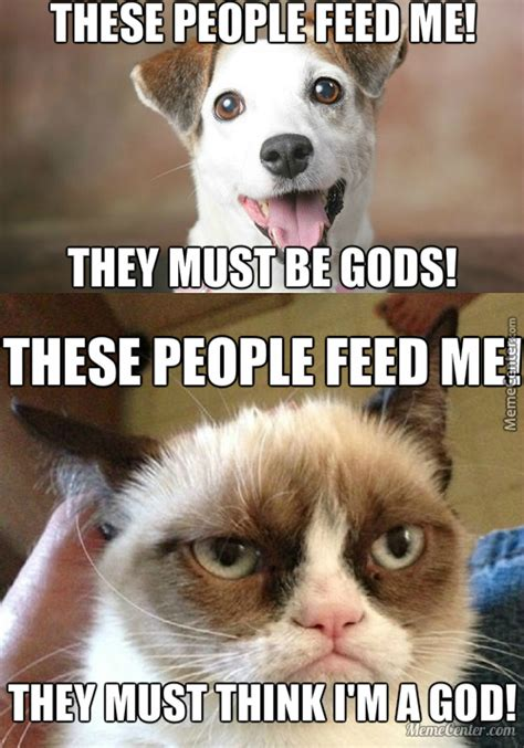 Dog And Cat Memes - cats vs dogs memes best collection of funny cats vs dogs