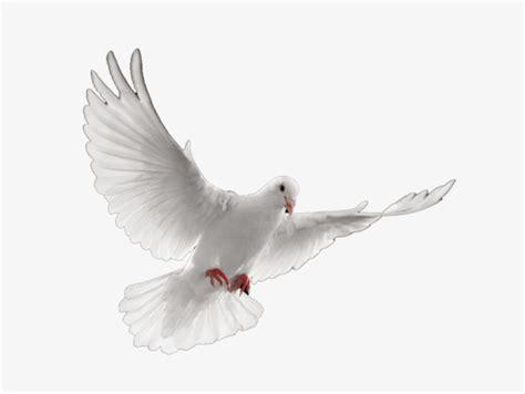 imagenes de palomas blancas en vuelo paloma blanca blanco palomo vuelo imagen png para