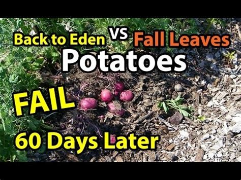 Back To Gardening Method by Supersize Your Vegetables With Wood Chips Rock Dust In
