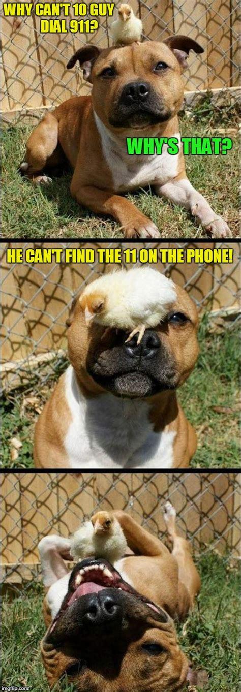 Serious Dog Meme - laughing dog imgflip