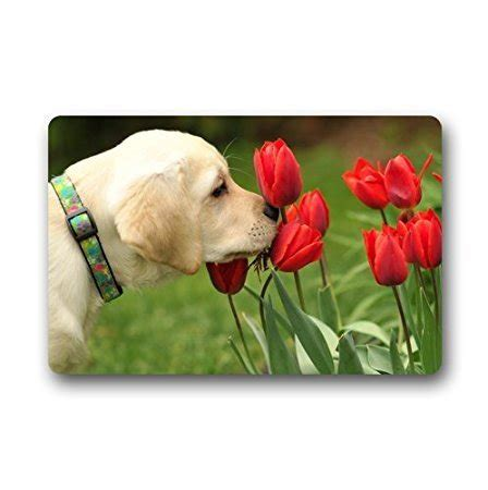 Labrador Doormat by Charmhome Fashion Living Room Doormat Labrador