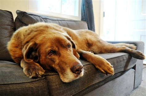 how to keep dog hair off couch get dog hair off couch best cleaning tips for clean couch