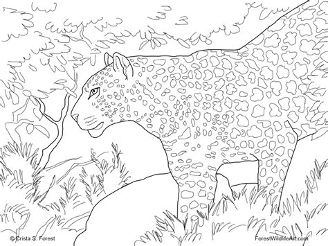 forest animals coloring pages for adults free rainforest coloring pages free coloring pages
