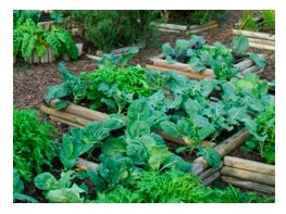 How To Set Up A Vegetable Garden Bed How To Build A Raised Bed For Vegetable Gardening The Veggie