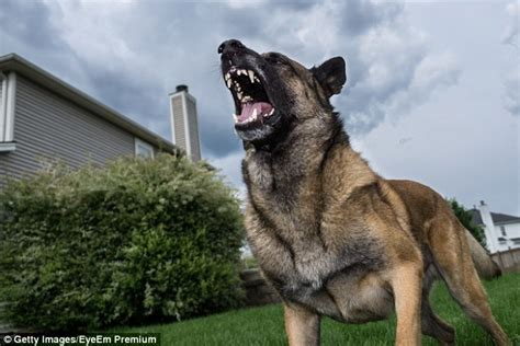 can dogs attacks how to survive attacks from the world s most dangerous animals daily mail