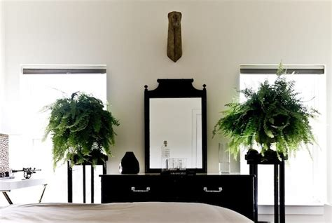 best plants for bedrooms creatively outfitting your home with green plant inspiration
