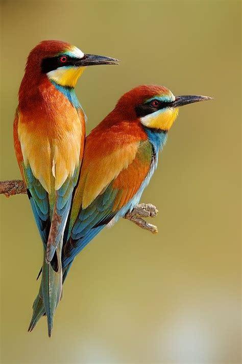 best 25 artificial birds ideas on pinterest tropical the 25 best tropical birds ideas on pinterest colorful
