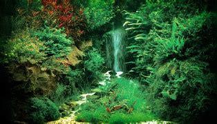 Pupuk Dasar Buat Aquascape cara membuat aquascape hidup itu