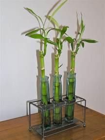 Feng Shui Plants For Front Door 8 Secrets Of Inviting Positive Energy By Using Feng Shui Plants For Front Door Tnc Landscape