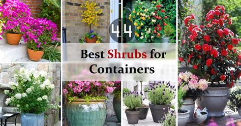 Vertical Garden Planters Uk - 44 best shrubs for containers best container gardening plants balcony garden web