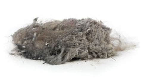 vacuum dust what is an anti allergy vacuum cleaner chem dry of