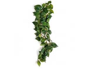 komodo hanging vines sumatra substrates plants and