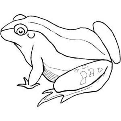 green frog coloring page big green frog coloring page