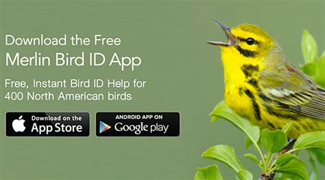 it s here free merlin bird id app now available for
