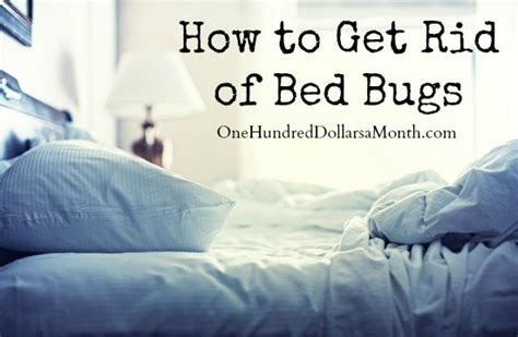 how to rid of bed bugs how to get rid of bed bugs one hundred dollars a month