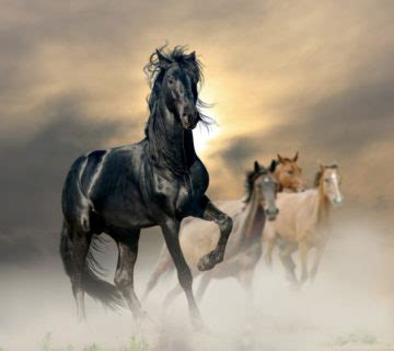 the five roles of a master herder a revolutionary model for socially intelligent leadership books the power of the herd working with eponaquest s horses to