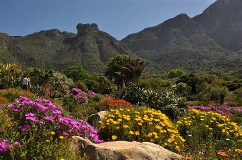 Kirstenbosch National Botanical Garden Newlands All Cape Town Botanical Gardens