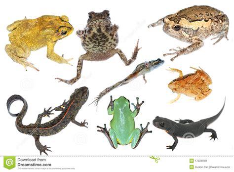 imagenes animales anfibios dibujos de animales anfibios imagui
