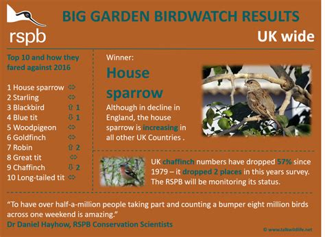 Rspb Great Garden Birdwatch Results Are In by Rspb Big Garden Birdwatch 2017 Results Talk Wildlife