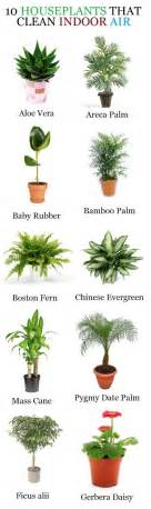 Indoor House Plants indoor house plants indoor gardens gardening indoor air cleaning house