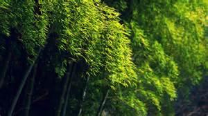 28 Green Forest Nature Landscape Wall Summer