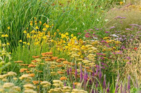 best perennials for full sun gardens in new england