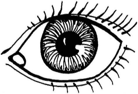 eye anatomy coloring page fireball coloring pages alltoys for