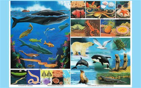 imagenes animales acuaticos animales acuaticos imagenes wallpapers laminas