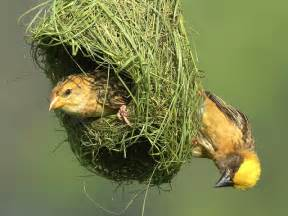 nest birds wallpapers entertainment only