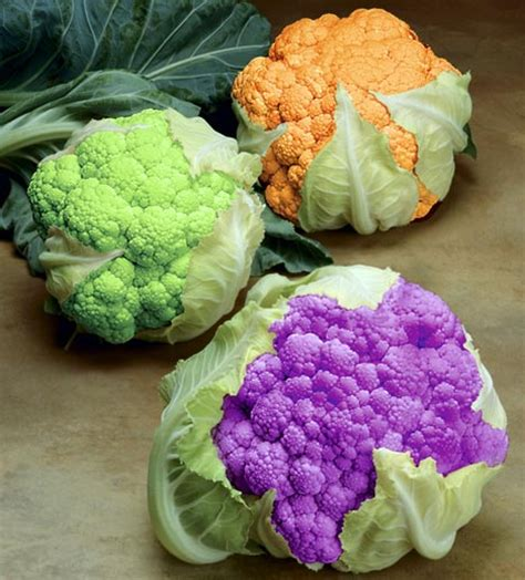 colored cauliflower food for thought foodie feature colorful cauliflower