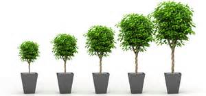 grow tree 8 awesome marketing techniques to increase conversions
