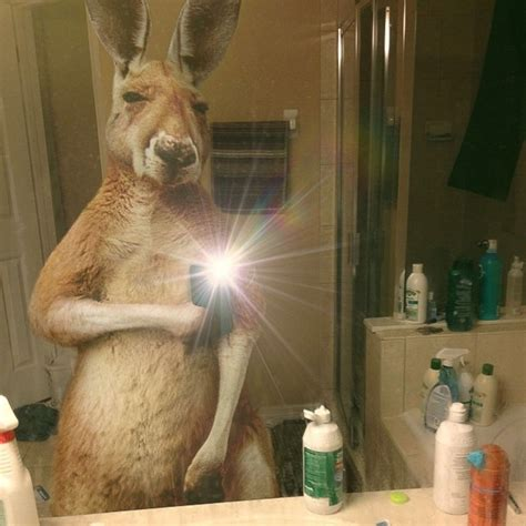Idea For Bathroom by Selfies From Nature What If Animals Took Selfies Diy
