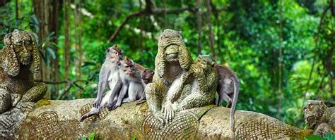 sangeh monkey forest  bali ubud attractions