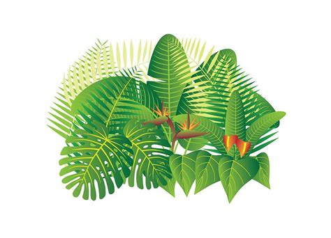 Tropical Decor by Tropical Jungle Plants Illustration Photograph By Jit Lim