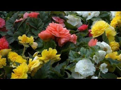 top  summer flowering plants youtube