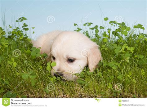 lonely puppy lonely royalty free stock images image 16920509
