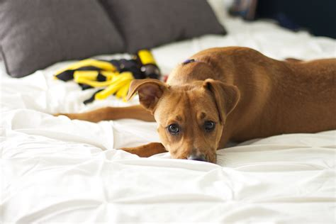 dog proofing house 15 tips for puppy proofing your house keeping it clean