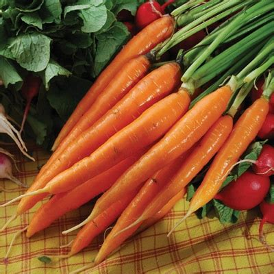 coding for carrots solutions scarlet nantes carrot seeds and plants vegetable