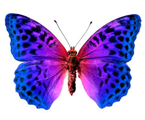 imagenes en png de mariposas mariposas toda la informaci 243 n sobre las mariposas