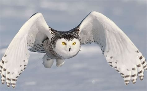 imagenes animales hermosos 23 animales salvajes muy hermosos fress